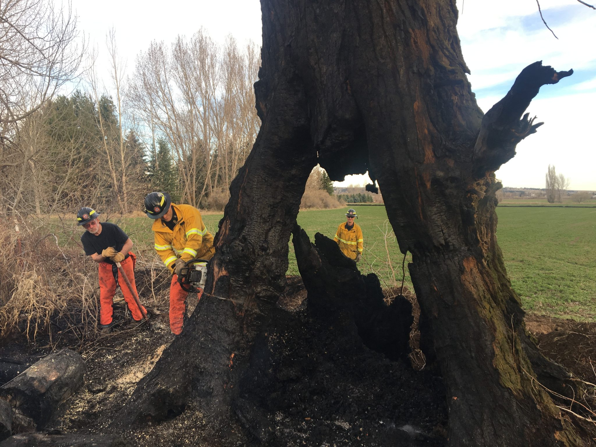 Wildland crews cutting trees